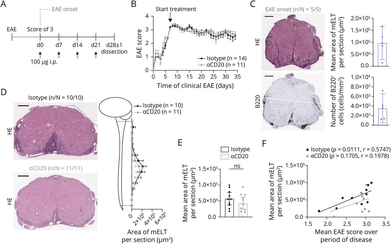 https://nn.neurology.org/content/nnn/8/4/e1012/F3.large.jpg